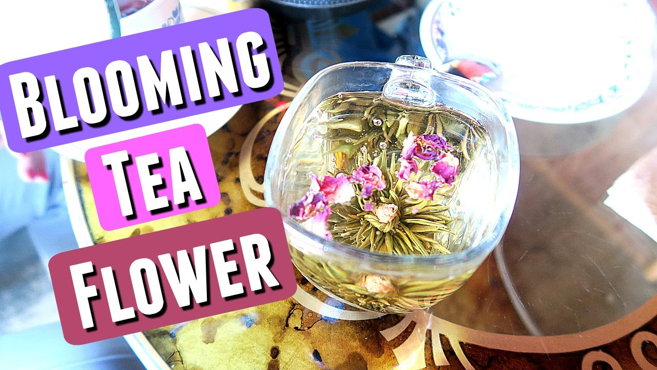 Blooming Tea Flower The Tea That Makes A Flower Bloom Youtube