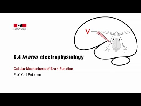 6.4 In vivo electrophysiology