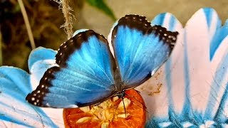 Beautiful Rainforest Butterflies