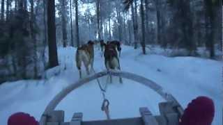 Husky sledge sleigh dog pull lapland