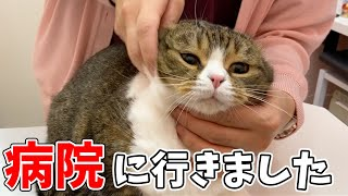 親子猫の病気についてご報告があります【朗報】