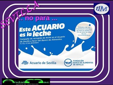 SEVILLA ... no para ...  04 -12 -2015   tlM