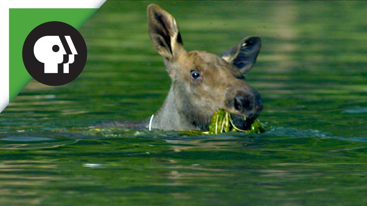 Baby Swim - Dolphin Swim Club
