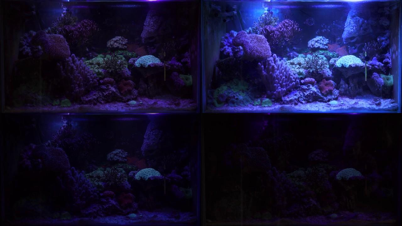 Быстро и выгодно купить светильник для аквариума, а также необходимые аксессуары для аквариумнгых светильников в киеве или украине. Для аквариумов, оборудованных собственным освещением, мы предлагаем погружные светильники, а также сменные отражатели и другие товары, в том числе и.