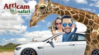 Un día en: Africam Safari / Puebla / México / Vlog
