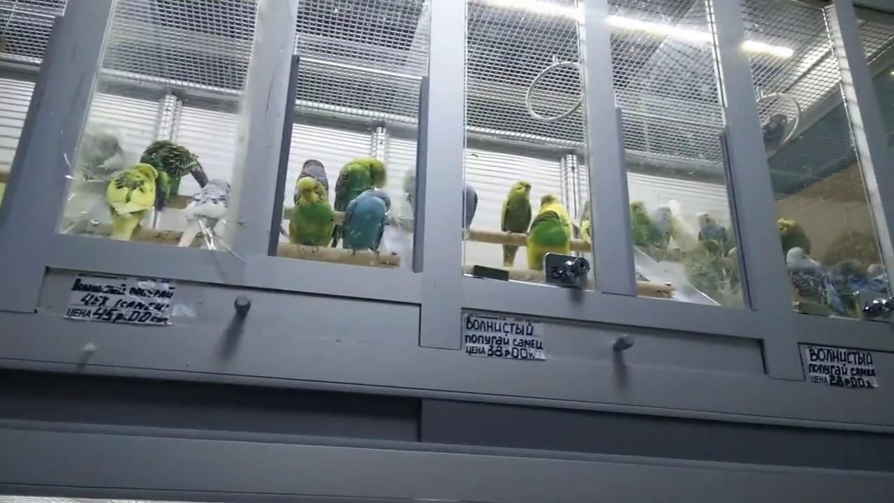 Как сделать жердочки и погрызушки? #Волнистый #попугай #уроки по .