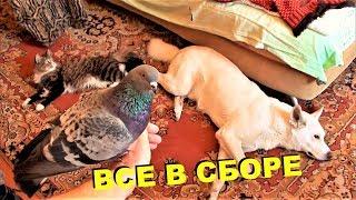 ВСЕ ЖИВОТНЫЕ В КОМНАТЕ 3 (голуби, ворона, кошки и собаки)