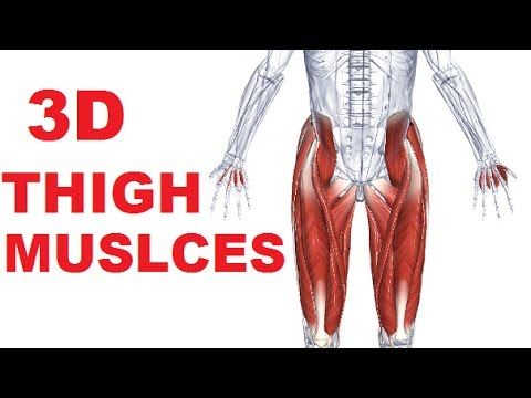 Muscles Of The Thigh Part 1 Anterior Compartment Anatomy Youtube