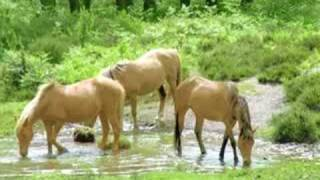 All the Pretty Horses (Harp Lullaby)