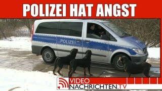 Nachrichten: Wachhunde blockieren Polizei und lassen Diebe laufen | VideonachrichtenTV