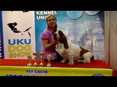 International Dog Show with FCI-CACIB award 30.08.2015