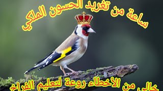 أفضل تغريد الحسون الملكي  (مقنين) خالي من الأخطاء 👌 لتعليم الفراخ chant de chardonneret royale