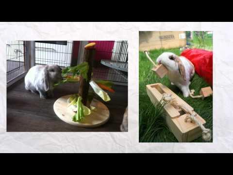 Wat te verwachten van een konijntje – opvang Binkies