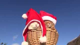 のんびりすぎる猫サンタで、今年もメリークリスニャス!