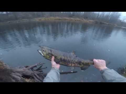 Salmon Fishing The Green River, WA