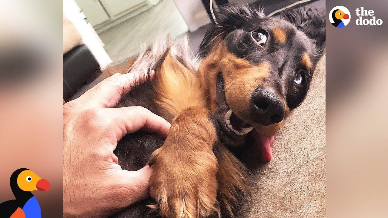 Dog Helps Heal His Dad's Broken Heart - MORPHEUS   The Dodo