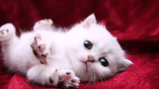 Картинки с кошками.