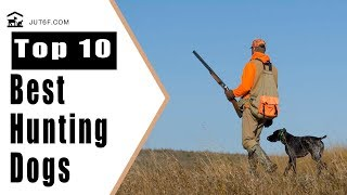 Hunting Dog Breeds - Top 10 Best Hunting Dogs In The World Because ...