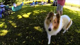 Maple Creek Collies 2013 Puppy Match