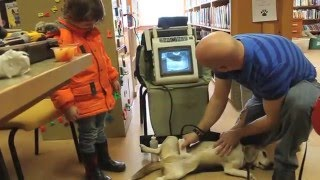 Local veterinarian offers insight into profession at library event