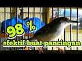 Suara Santai Ciblek Gacor Efektif Buat Pancingan Ciblek Agar Gacor  Mp3 - Mp4 Download