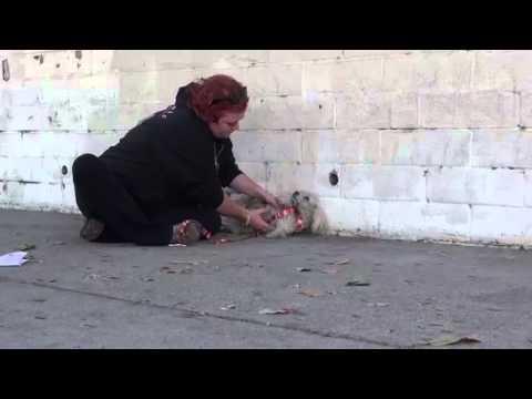 La conmovedora historia del caniche atropellado y rescatado