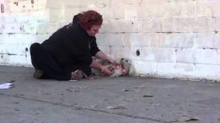 Rescatando A Un Perro Poodle De La Calle