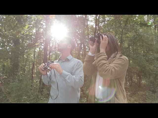 Bird Watching - I Viaggi dell'Origano
