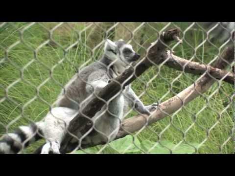 colchester zoo homework helper