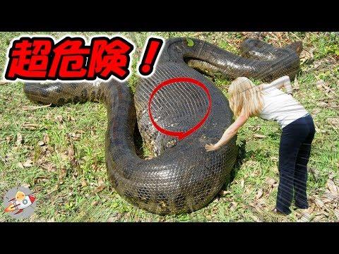 【衝撃】世界で最も危険な蛇9選