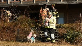 4 dogs rescued from Groton City house fire