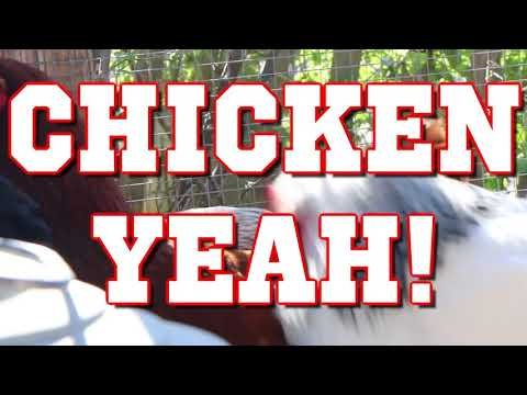 Chicken Yeah! - Parry Gripp