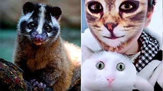 Смешные Животные 2020 /Лучшие Приколы 2020/ Coub/ Смехотерапия / Котики/ Приколы с котами (28)