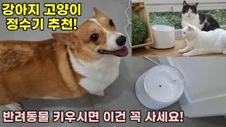 강아지 고양이 정수기 추천! 앤커 유피 펫정수기!