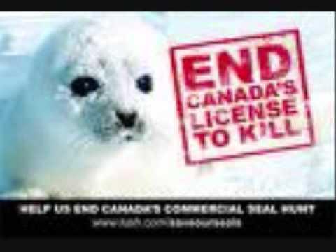 STOP SEAL HUNT