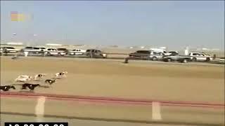 Unbelievable Dog race in dubai