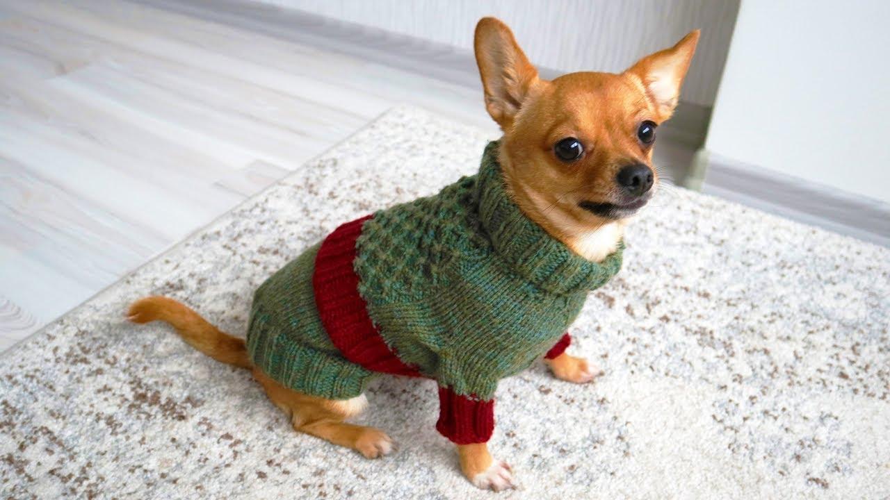 Easy Dog Sweater Knitting Pattern