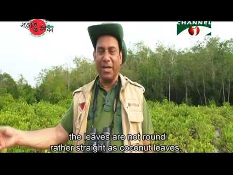 Nature and Life - Episode 218 (Sundarban East Wildlife Sanctuary)