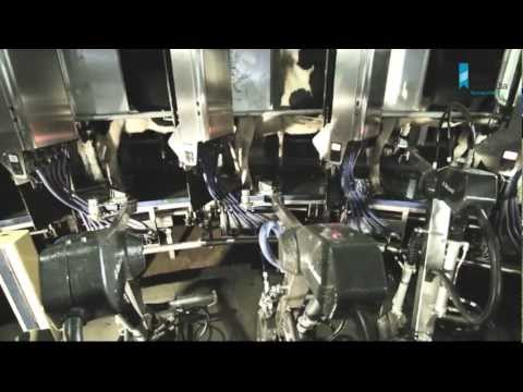 Automatic Milking Systems (AMS) - Dairy Australia