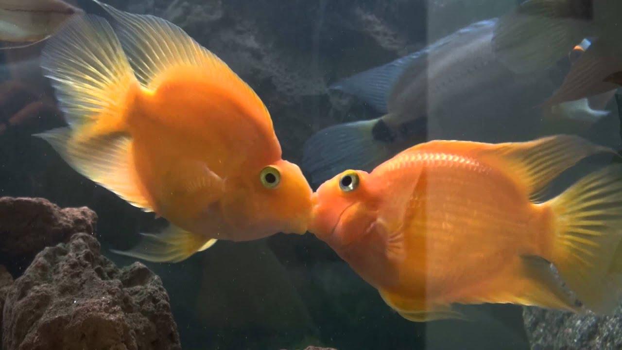 Video Fische