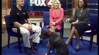 Bark Busters - Patrick Logue - Natural Dog Training Methods