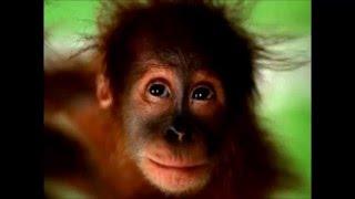 Mono canta feliz cumpleaños