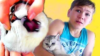 У Кошки поломался ЗУБ! Как же ЕЙ БОЛЬНО! Коля ВЫРЫВАЕТ ЗУБ!!!
