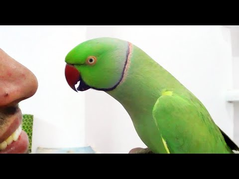 Conversation with my parrot,Worlds best Bird.