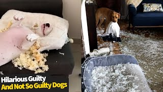 Best Guilty & Not So Guilty Dog Moments  Funny Dog Compilation