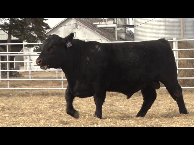 Express Ranches Lot 469