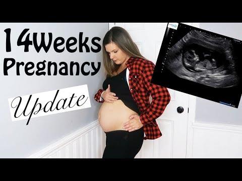14 WEEKS PREGNANCY UPDATE| ULTRASOUND RESULTS| SYMPTOMS| SECOND TRIMESTER
