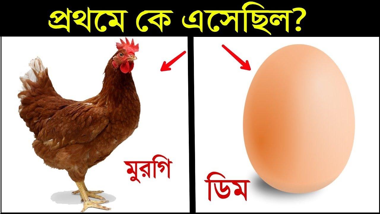 প্রথম মুরগি নাকি ডিম এসেছিল?  Who Came First? EGG OR CHICKEN | Amazing Random Facts in Bangla