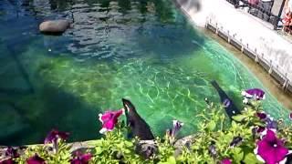 Зоопарк в Москве.