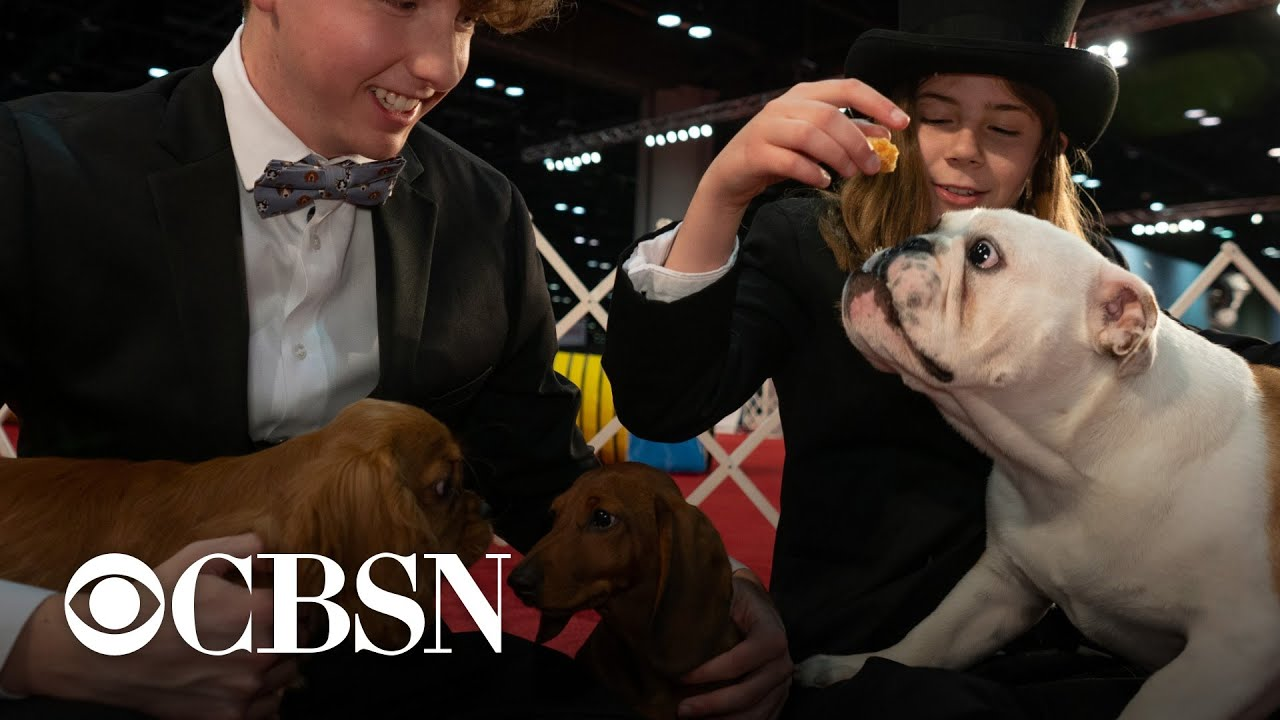 Seven adorable puppies competed in a dog show — but only one could be crowned Best in Show